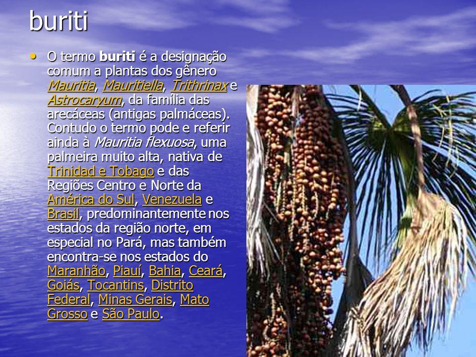 buriti O termo buriti é a designação comum a plantas dos gênero Mauritia, Mauritiella, Trithrinax e Astrocaryum, da família das arecáceas (antigas pal