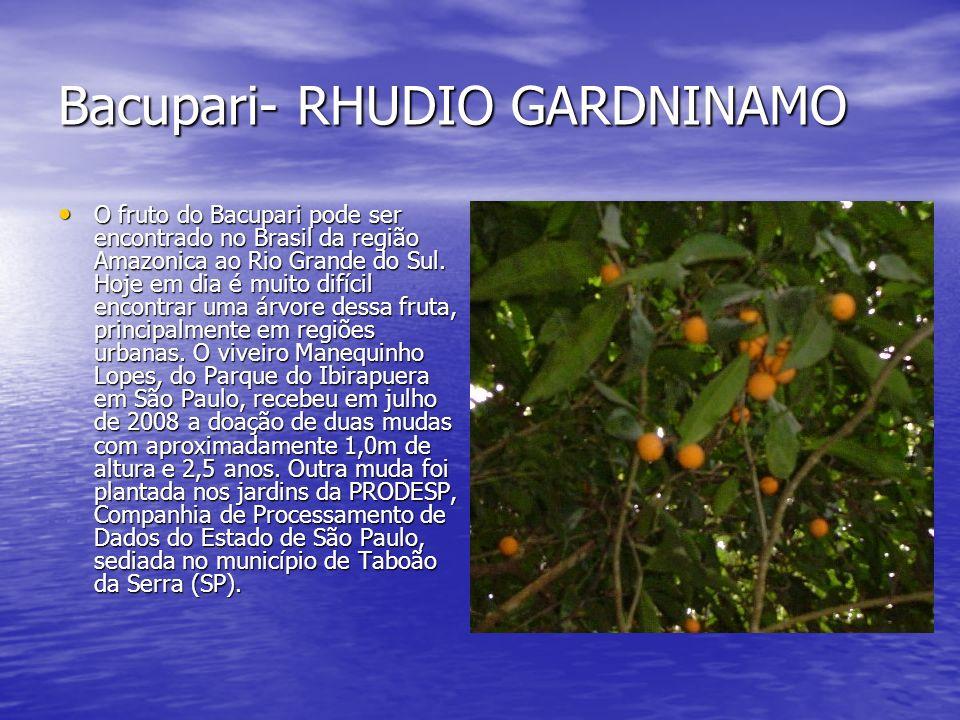 Bacupari- RHUDIO GARDNINAMO O fruto do Bacupari pode ser encontrado no Brasil da região Amazonica ao Rio Grande do Sul. Hoje em dia é muito difícil en