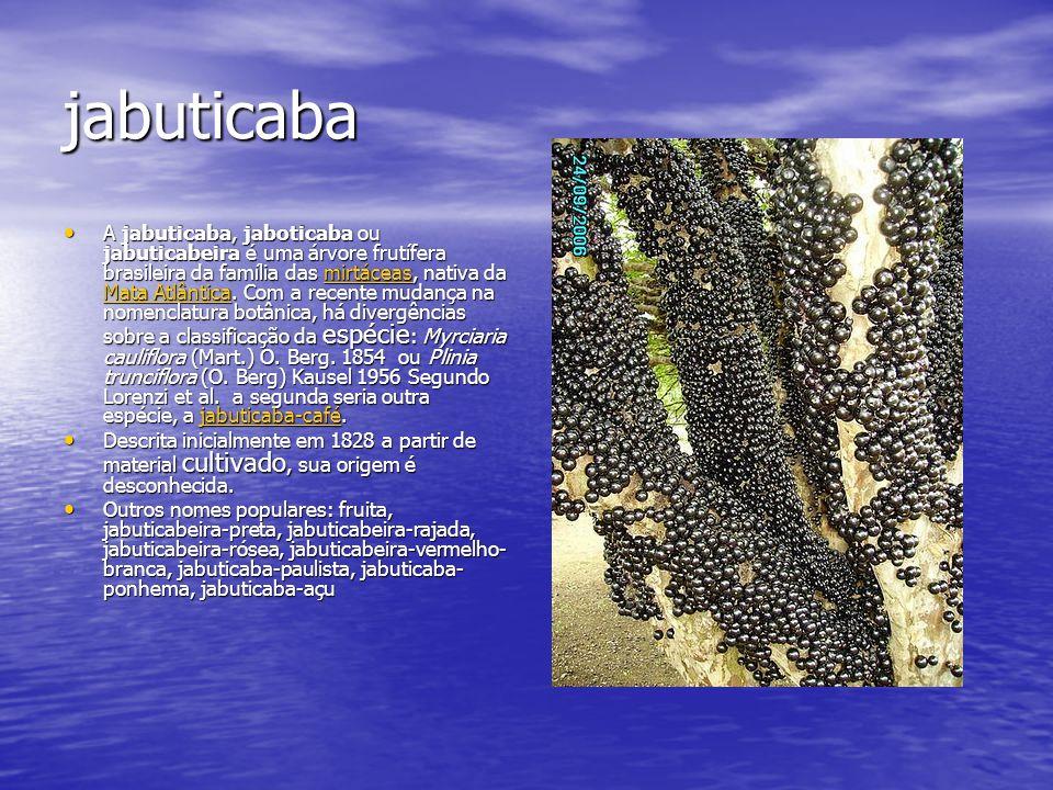 jabuticaba A jabuticaba, jaboticaba ou jabuticabeira é uma árvore frutífera brasileira da família das mirtáceas, nativa da Mata Atlântica. Com a recen