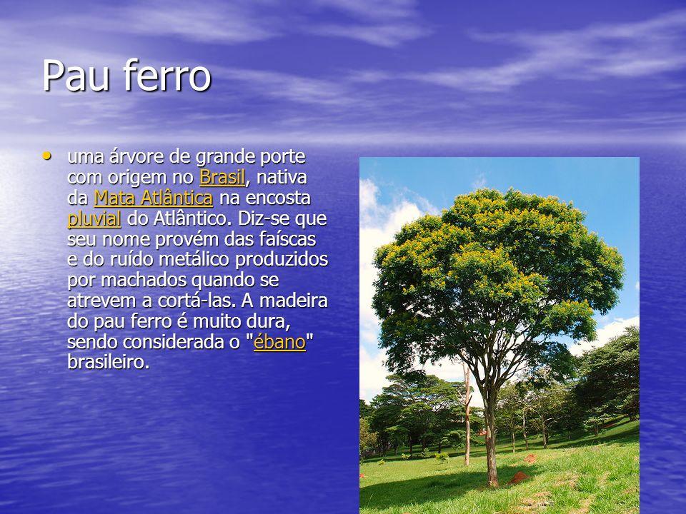 Pau ferro uma árvore de grande porte com origem no Brasil, nativa da Mata Atlântica na encosta pluvial do Atlântico. Diz-se que seu nome provém das fa