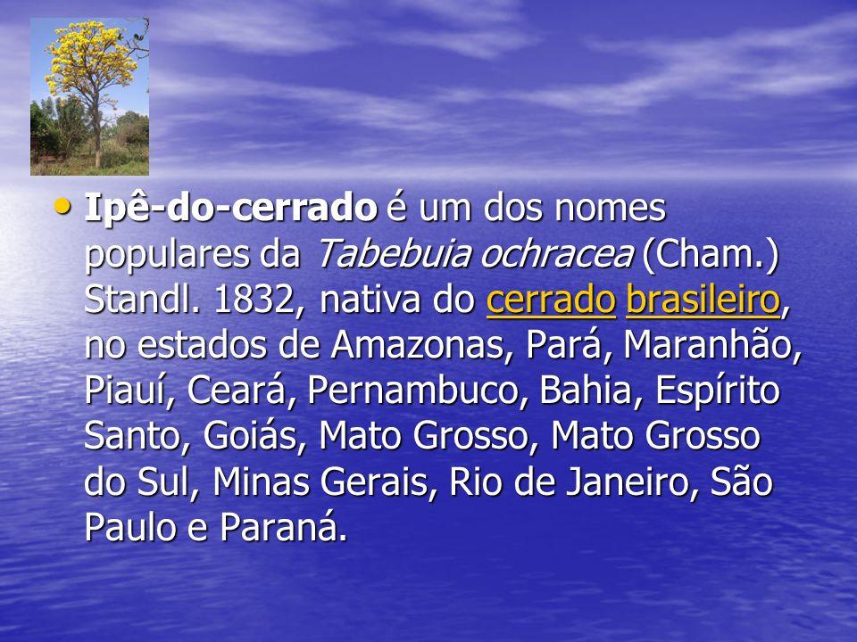 Ipê-do-cerrado é um dos nomes populares da Tabebuia ochracea (Cham.) Standl. 1832, nativa do cerrado brasileiro, no estados de Amazonas, Pará, Maranhã