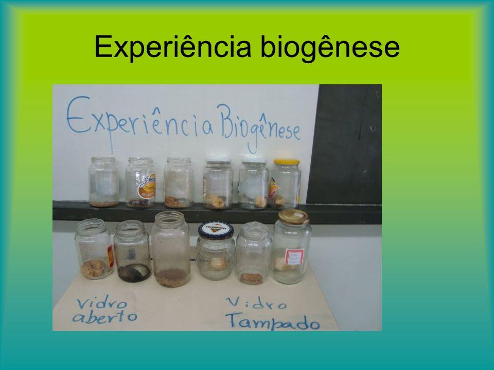Experiência biogênese