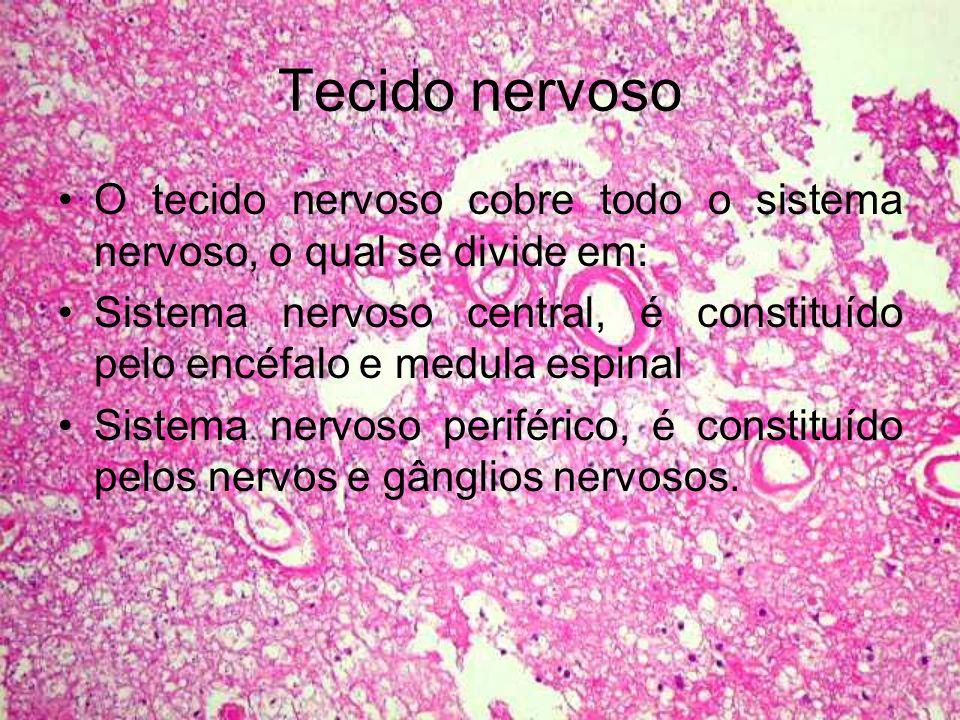 Tecido nervoso O tecido nervoso cobre todo o sistema nervoso, o qual se divide em: Sistema nervoso central, é constituído pelo encéfalo e medula espin