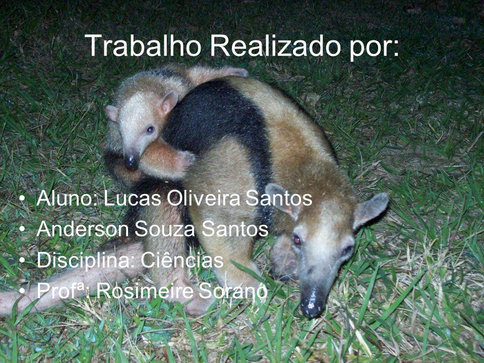 Trabalho Realizado por: Aluno: Lucas Oliveira Santos Anderson Souza Santos Disciplina: Ciências Profª: Rosimeire Sorano
