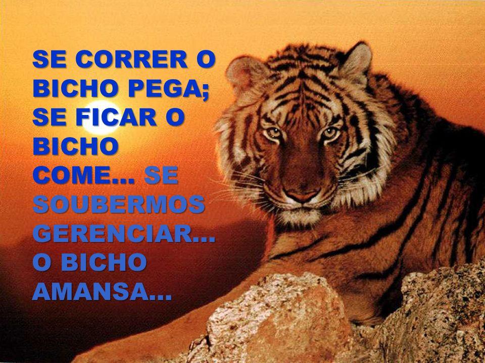 SE CORRER O BICHO PEGA; SE FICAR O BICHO COME... SE SOUBERMOS GERENCIAR... O BICHO AMANSA...