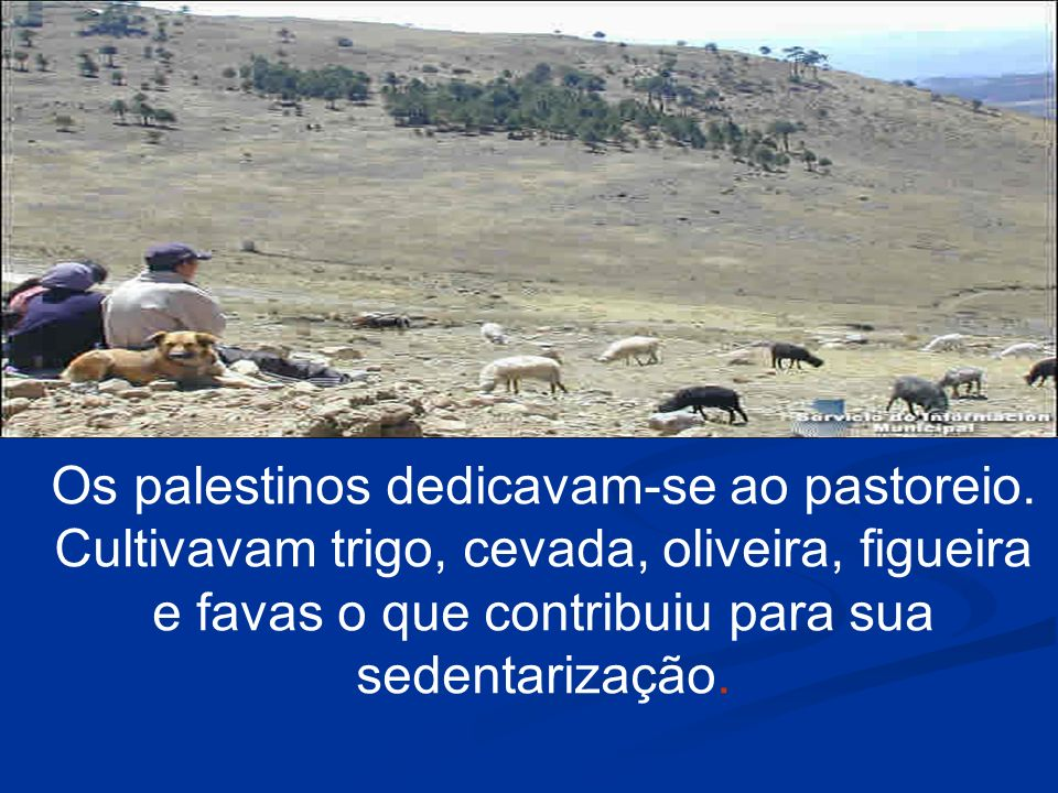 Os palestinos dedicavam-se ao pastoreio. Cultivavam trigo, cevada, oliveira, figueira e favas o que contribuiu para sua sedentarização.