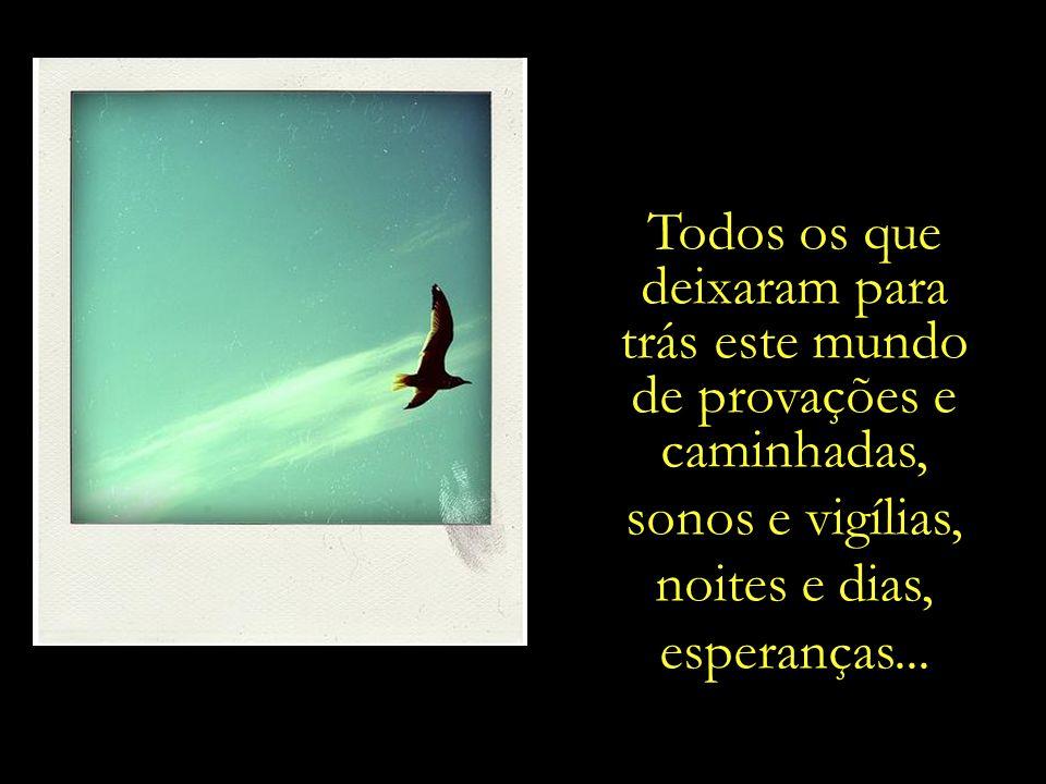 ... Uma metáfora visual e poética que se revela aos que se dispõem a enxergar além do que os olhos podem...... E ao deslizar pelo céu, as aves nos rec