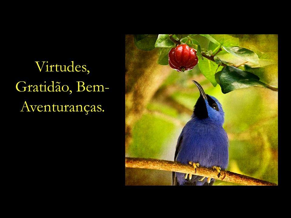 Uma dieta espiritual farta de Amor e Bondade, Caridade, Pureza, Compaixão, Perdão e Justiça.