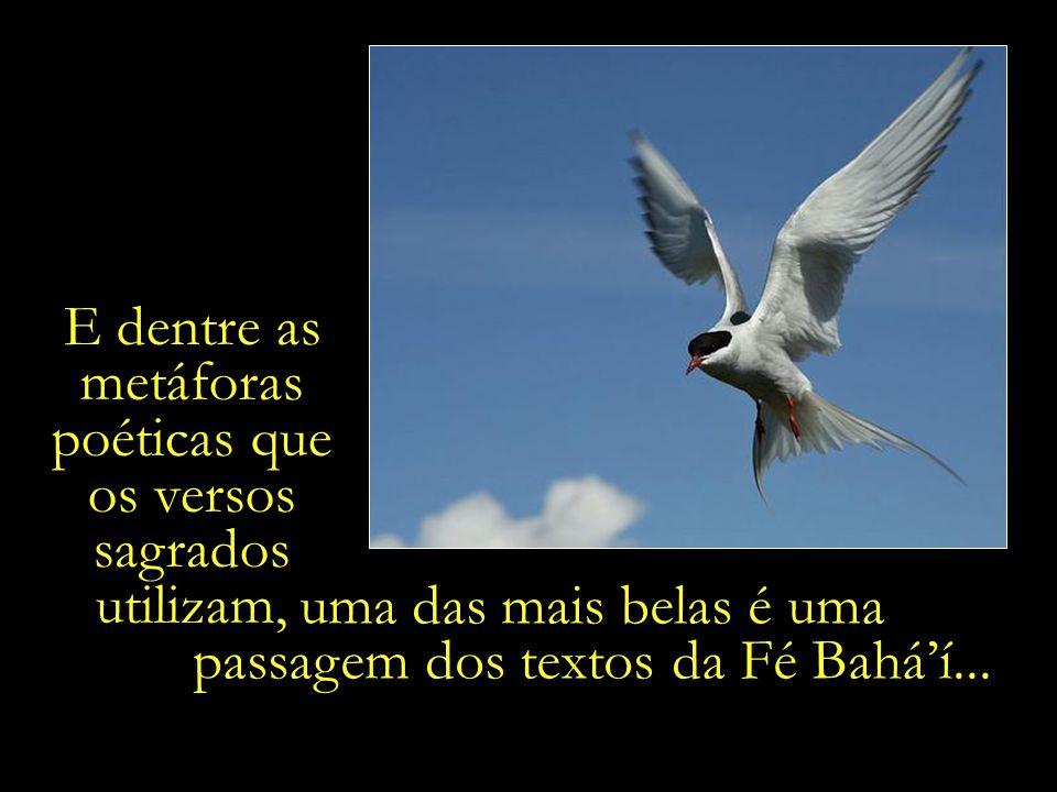 E dentre as metáforas poéticas que os versos sagrados utilizam, uma das mais belas é uma passagem dos textos da Fé Baháí...