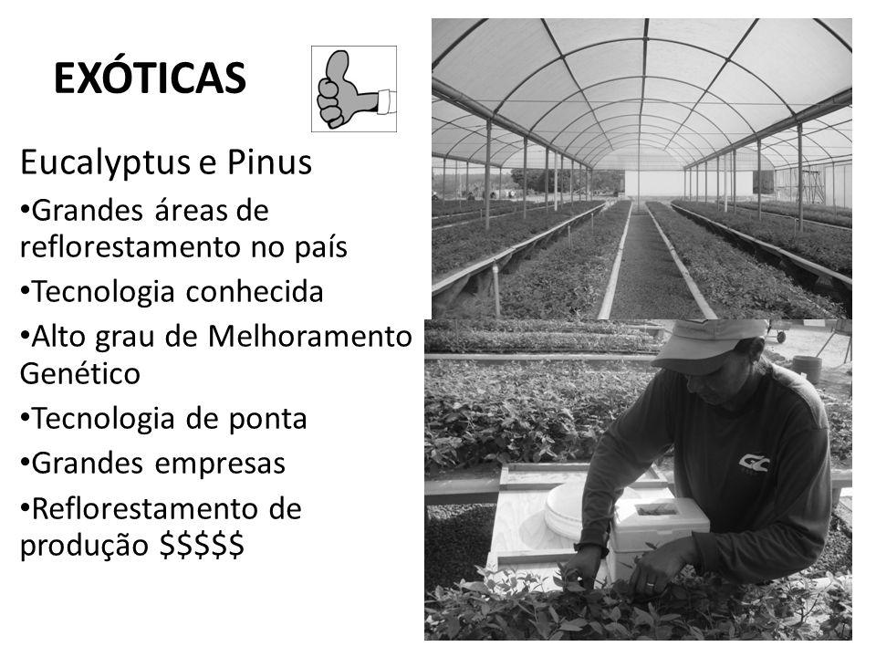 EXÓTICAS Eucalyptus e Pinus Grandes áreas de reflorestamento no país Tecnologia conhecida Alto grau de Melhoramento Genético Tecnologia de ponta Grand