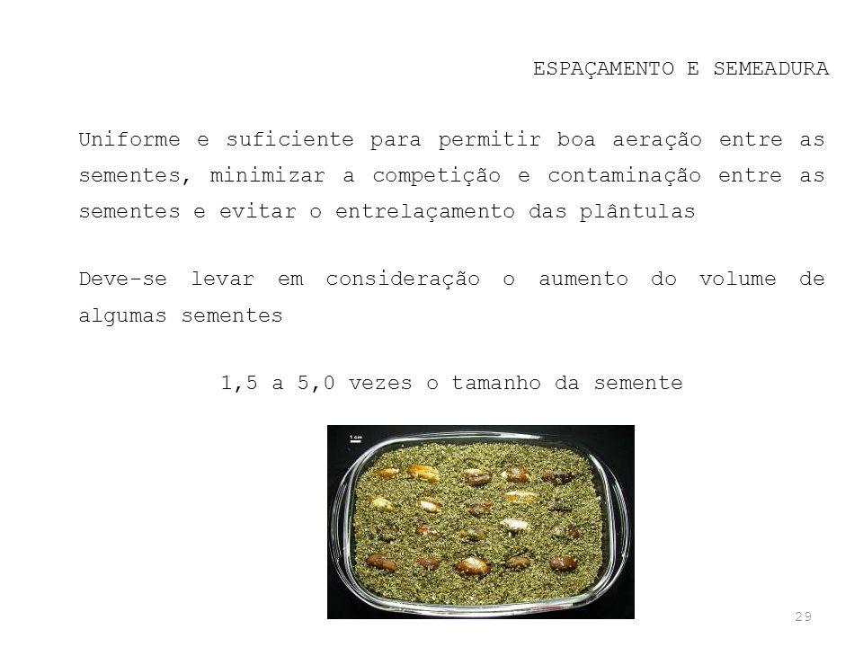 29 ESPAÇAMENTO E SEMEADURA Uniforme e suficiente para permitir boa aeração entre as sementes, minimizar a competição e contaminação entre as sementes