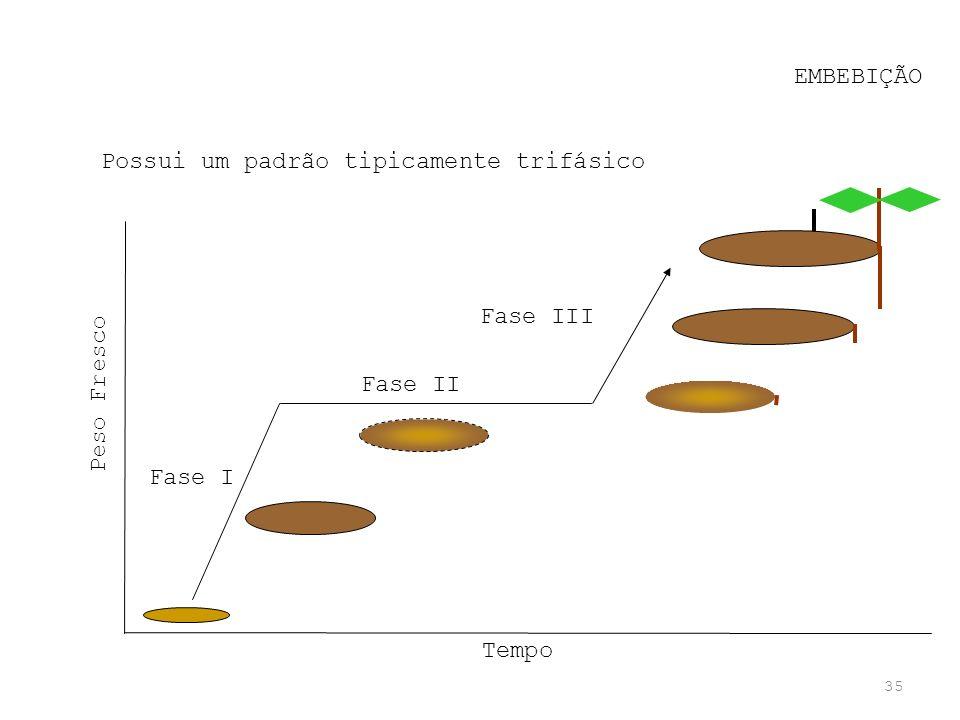 35 EMBEBIÇÃO Possui um padrão tipicamente trifásico Fase I Fase II Fase III Tempo Peso Fresco