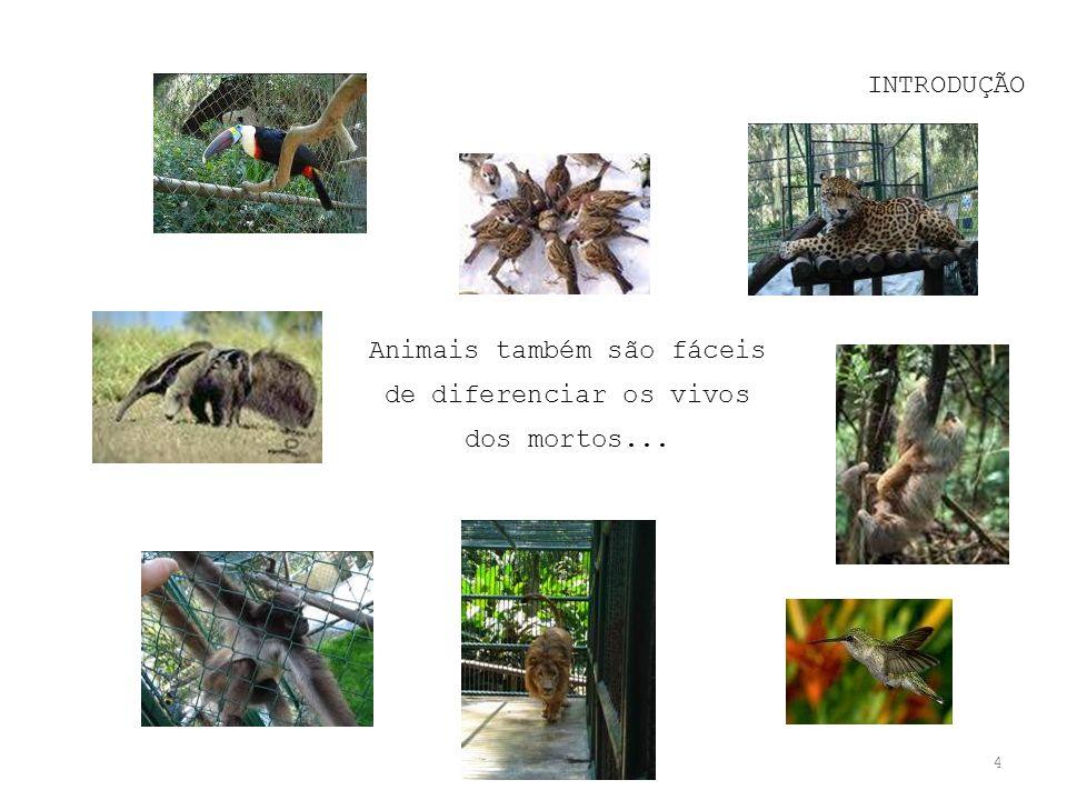 4 Animais também são fáceis de diferenciar os vivos dos mortos...