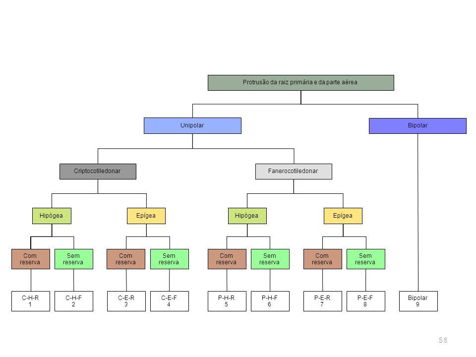 58 TIPOS DE GERMINAÇÃO Protrusão da raiz primária e da parte aérea Unipolar Bipolar Com reserva Criptocotiledonar HipógeaEpígea Sem reserva Com reserv