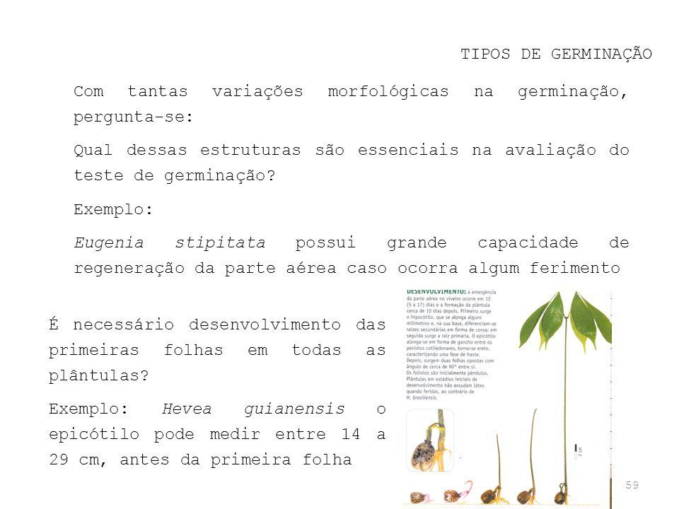 59 TIPOS DE GERMINAÇÃO Com tantas variações morfológicas na germinação, pergunta-se: Qual dessas estruturas são essenciais na avaliação do teste de ge