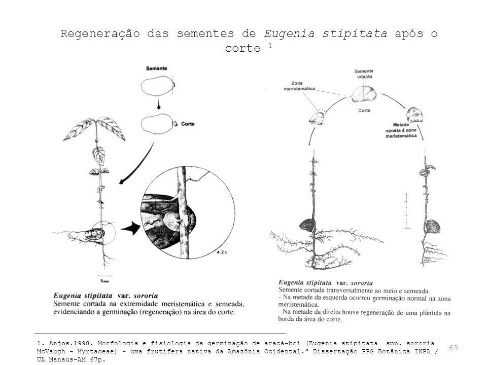 69 Regeneração das sementes de Eugenia stipitata após o corte 1 1. Anjos.1998. Morfologia e fisiologia da germinação de aracá-boi (Eugenia stipitata s