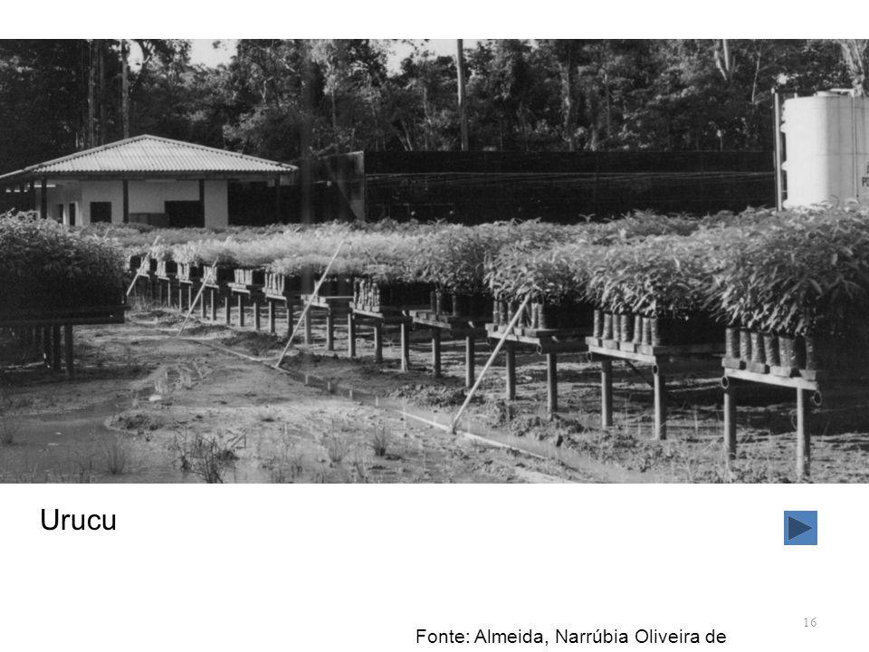 16 Urucu Fonte: Almeida, Narrúbia Oliveira de