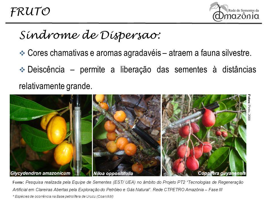 Sindrome de Dispersao: Cores chamativas e aromas agradavéis – atraem a fauna silvestre. Deiscência – permite a liberação das sementes à distâncias rel