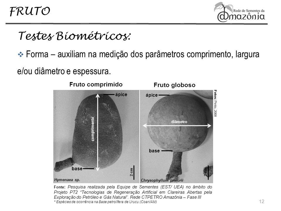 FRUTO Testes Biométricos: Forma – auxiliam na medição dos parâmetros comprimento, largura e/ou diâmetro e espessura. 12 dimensao Fruto globoso Chrysop