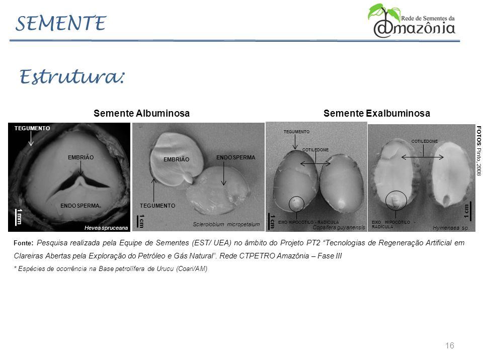 16 SEMENTE Estrutura: ENDOSPERMA TEGUMENTO EMBRIÃO Sclerolobium micropetalum 1 cm COTILÉDONE EIXO HIPOCÓTILO - RADÍCULA Copaifera guyanensis 1 cm TEGU