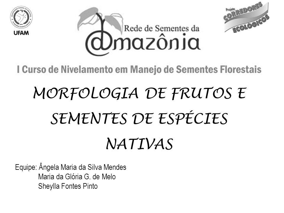 INTRODUÇÃO A morfologia vegetal é o ramo da botânica que estuda as formas e estruturas das plantas e suas partes.
