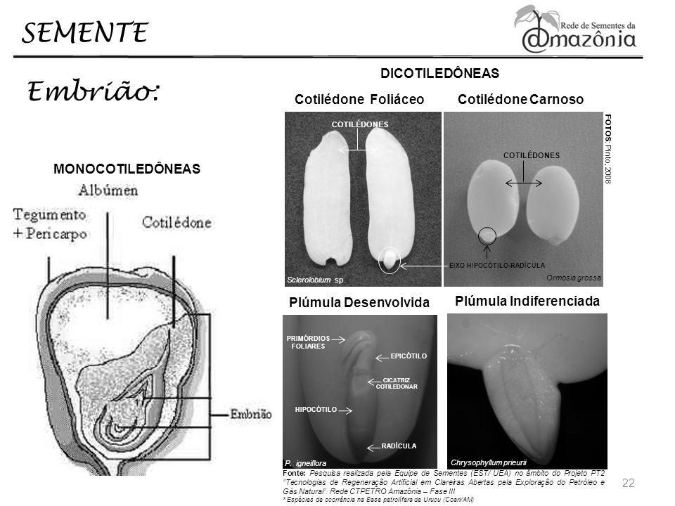 22 SEMENTE Embrião: MONOCOTILEDÔNEAS DICOTILEDÔNEAS Cotilédone Foliáceo Cotilédone Carnoso COTILÉDONES EIXO HIPOCÓTILO-RADÍCULA Ormosia grossa Sclerol