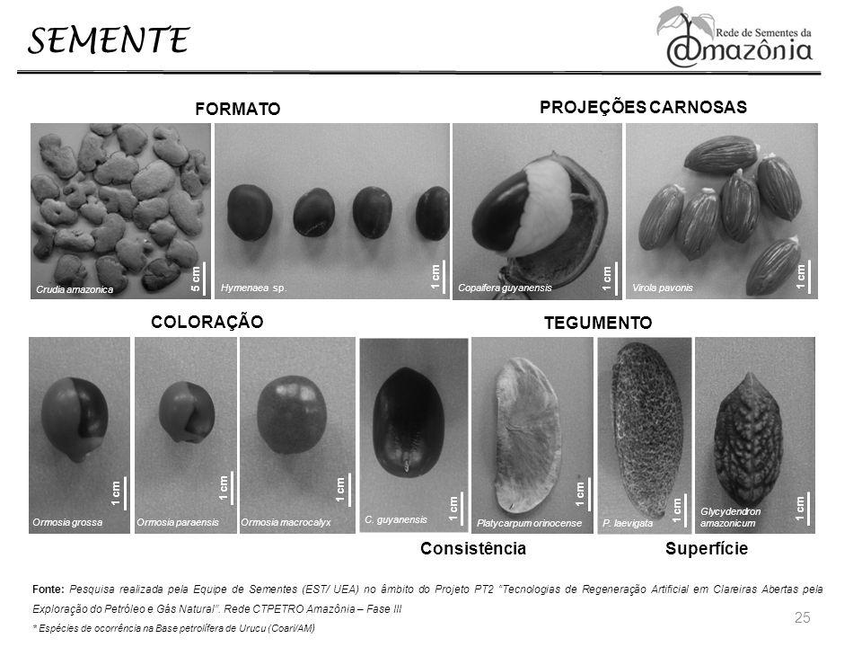 SEMENTE 25 TEGUMENTO Consistência Superfície C. guyanensis Platycarpum orinocense P. laevigata Glycydendron amazonicum 1 cm COLORAÇÃO Ormosia grossaOr