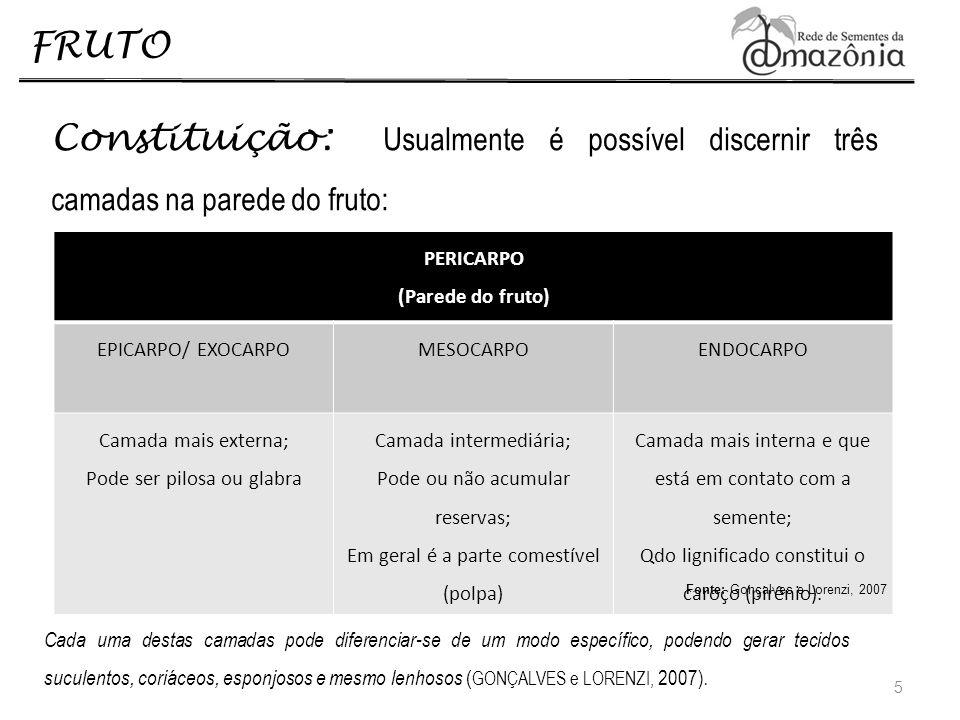 FRUTO 6 EXOCARPO ENDOCARPO MESOCARPO EXOCARPO MESOCARPO ENDOCARPO PIRÊNIO EXOCARPO MESOCARPO ENDOCARPO Fruto CarnosoFruto Seco Pouteria laevigata Glycydendron amazonicum Crudia amazonica 1 cm 2 cm 5 cm Fonte : Pesquisa realizada pela Equipe de Sementes (EST/ UEA) no âmbito do Projeto PT2 Tecnologias de Regeneração Artificial em Clareiras Abertas pela Exploração do Petróleo e Gás Natural.