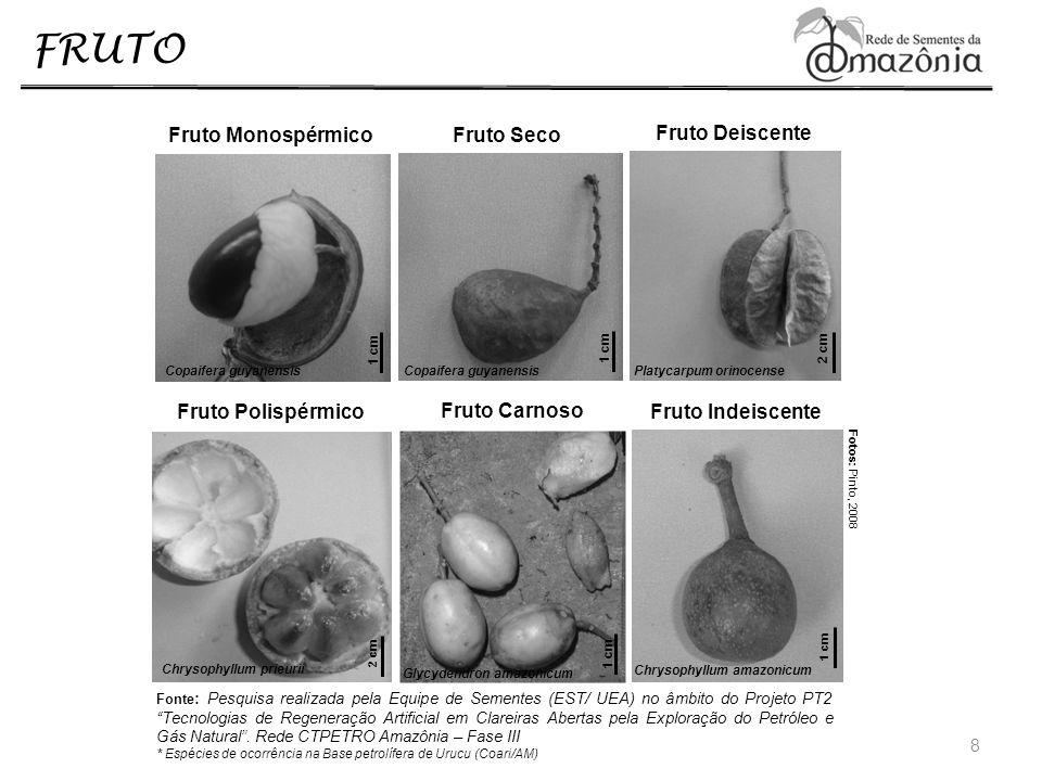 FRUTO Morfologia: A variabilidade morfológica dos frutos é quase ilimitada, gerando estruturas tão distintas quanto um coco, um caqui e uma banana (GONÇALVES e LORENZI, 2007).