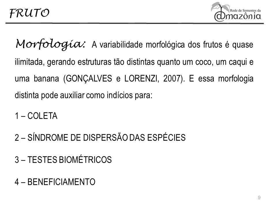 FRUTO Morfologia: A variabilidade morfológica dos frutos é quase ilimitada, gerando estruturas tão distintas quanto um coco, um caqui e uma banana (GO