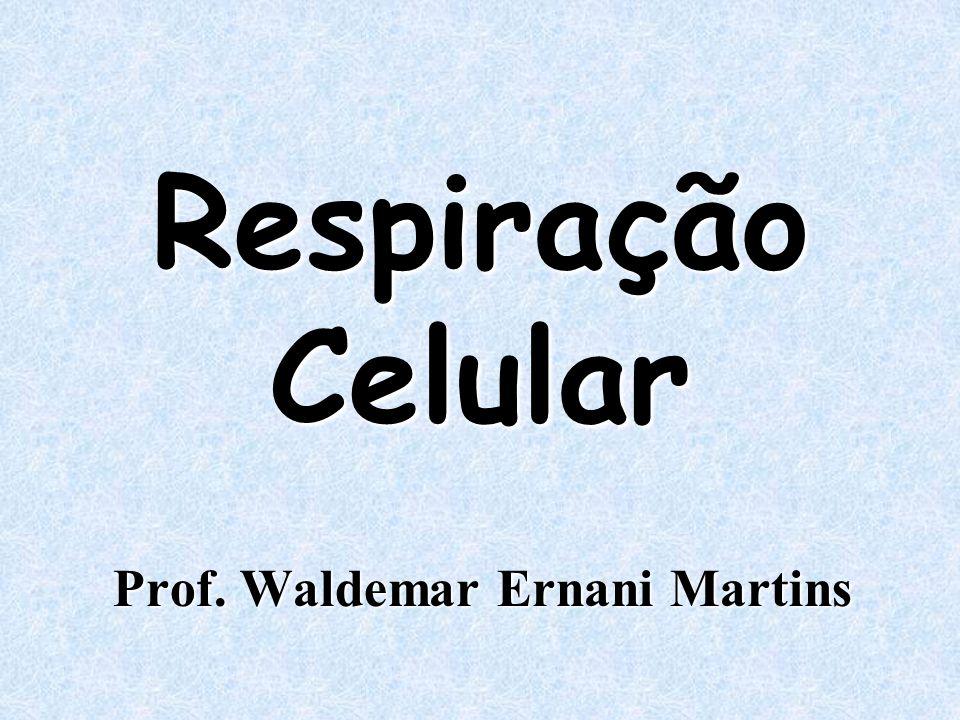 Respiração Celular Prof. Waldemar Ernani Martins