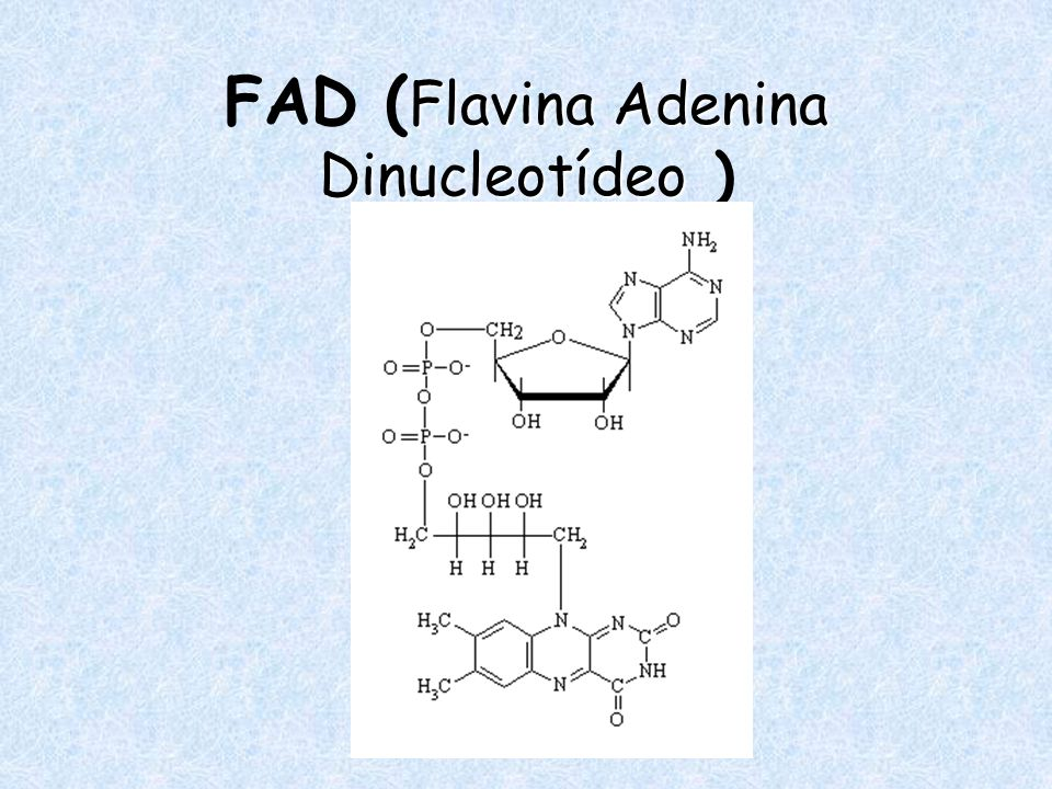 Flavina Adenina Dinucleotídeo FAD ( Flavina Adenina Dinucleotídeo )