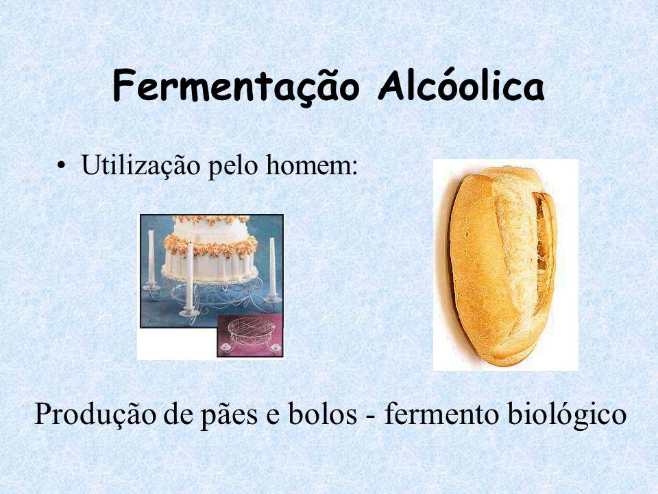 Fermentação Alcóolica Utilização pelo homem: Produção de pães e bolos - fermento biológico