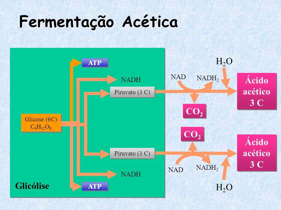 Fermentação Acética Glicólise Glicose (6C) C 6 H 12 O 6 ATP NADH Ácido acético 3 C CO 2 NAD NADH 2 H2OH2O Ácido acético 3 C CO 2 NAD NADH 2 H2OH2O Pir