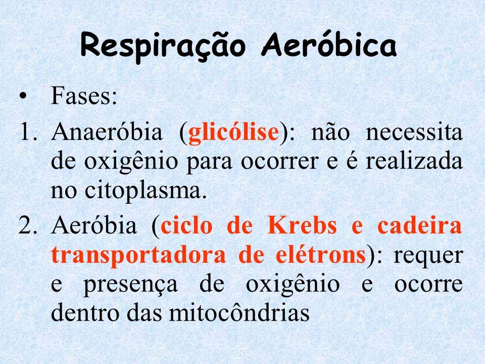 Fases: 1.Anaeróbia (glicólise): não necessita de oxigênio para ocorrer e é realizada no citoplasma. 2.Aeróbia (ciclo de Krebs e cadeira transportadora