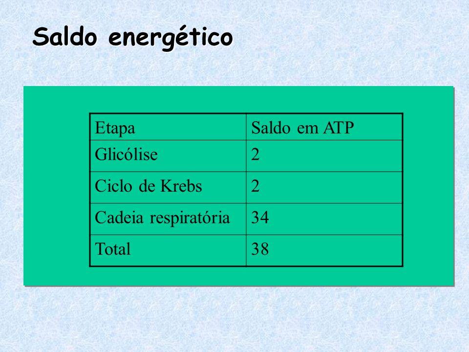 Saldo energético EtapaSaldo em ATP Glicólise2 Ciclo de Krebs2 Cadeia respiratória34 Total38