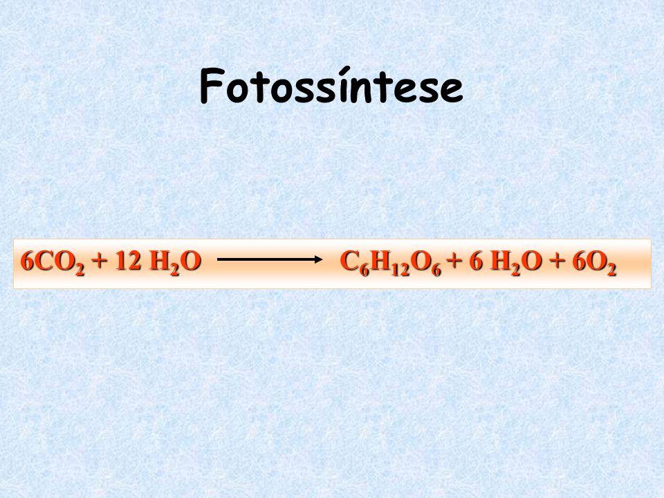 Fotossíntese 6CO 2 + 12 H 2 O C 6 H 12 O 6 + 6 H 2 O + 6O 2