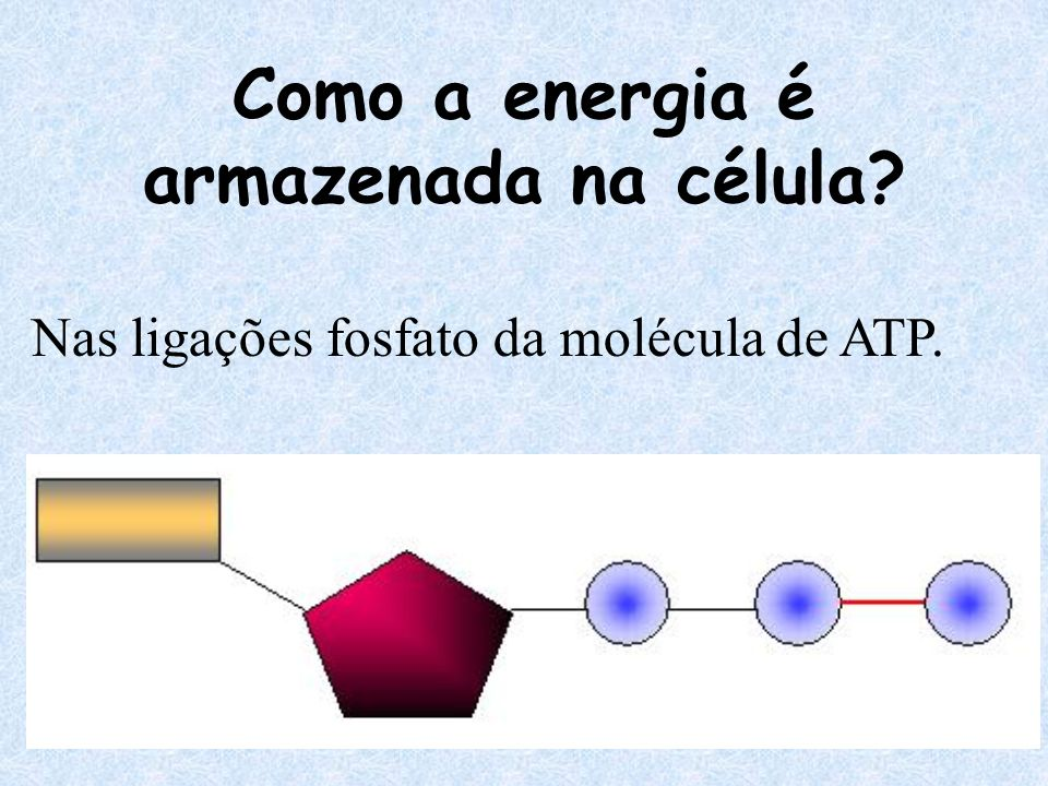 ATP ATP = Adenosina tri-fosfato Armazena nas suas ligações fosfatos a energia liberada na quebra da glicose.