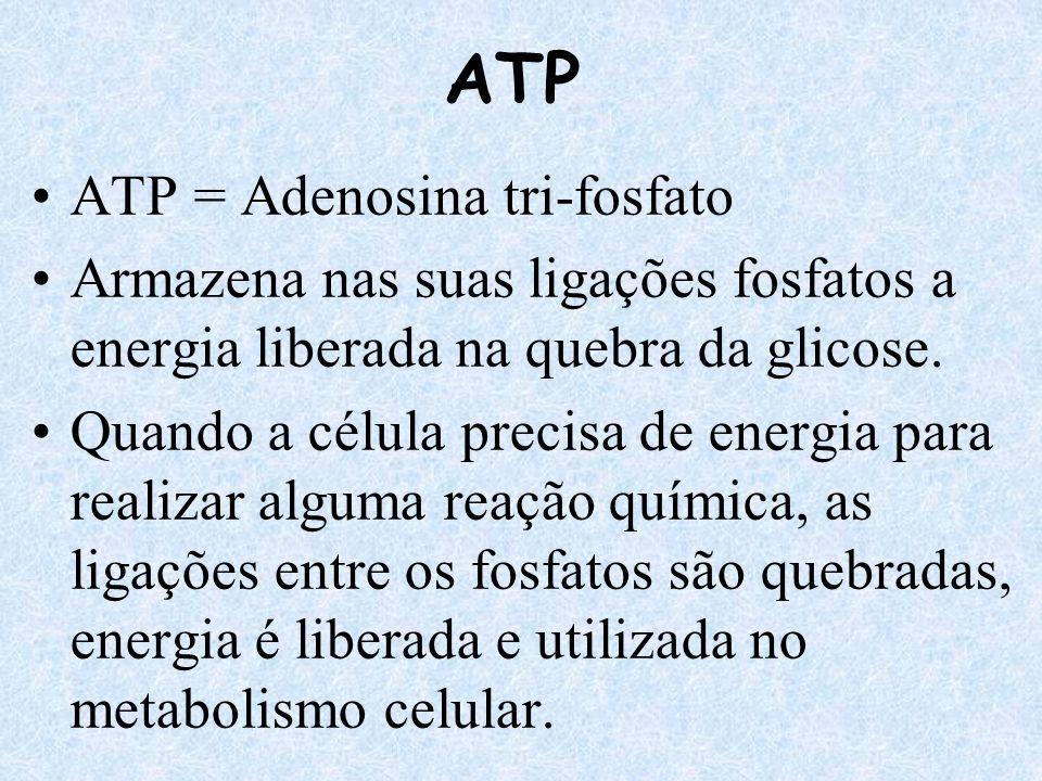 ATP ATP = Adenosina tri-fosfato Armazena nas suas ligações fosfatos a energia liberada na quebra da glicose. Quando a célula precisa de energia para r