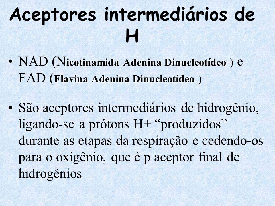 Aceptores intermediários de H N icotinamida Adenina Dinucleotídeo Flavina Adenina DinucleotídeoNAD (N icotinamida Adenina Dinucleotídeo ) e FAD ( Flav