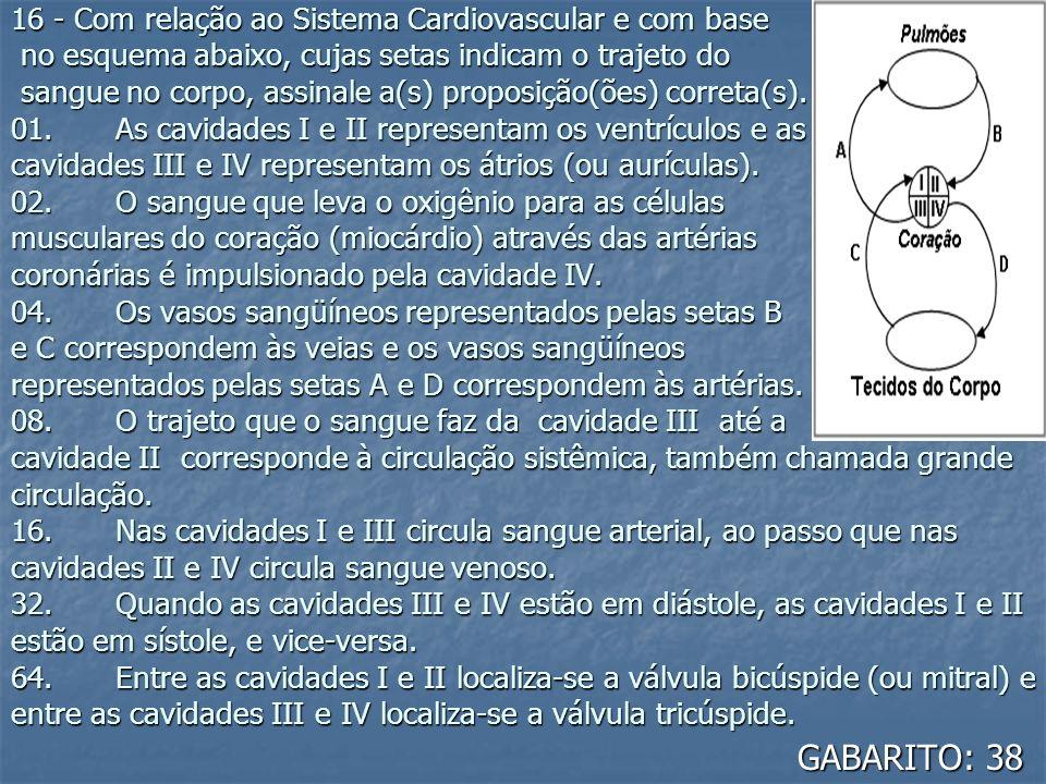 16 - Com relação ao Sistema Cardiovascular e com base no esquema abaixo, cujas setas indicam o trajeto do sangue no corpo, assinale a(s) proposição(õe