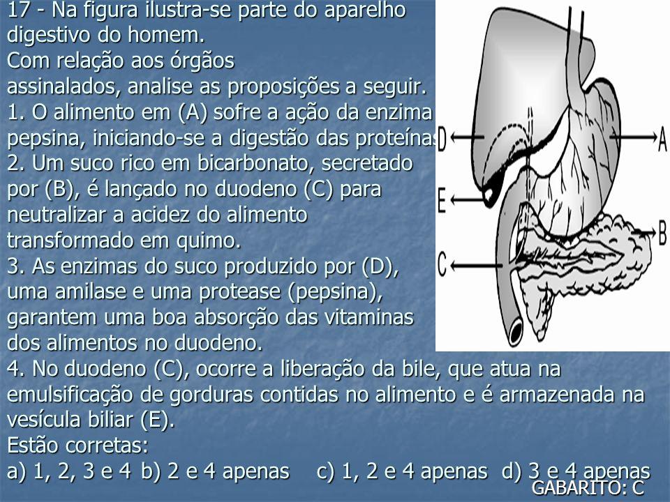 17 - Na figura ilustra-se parte do aparelho digestivo do homem. Com relação aos órgãos assinalados, analise as proposições a seguir. 1. O alimento em
