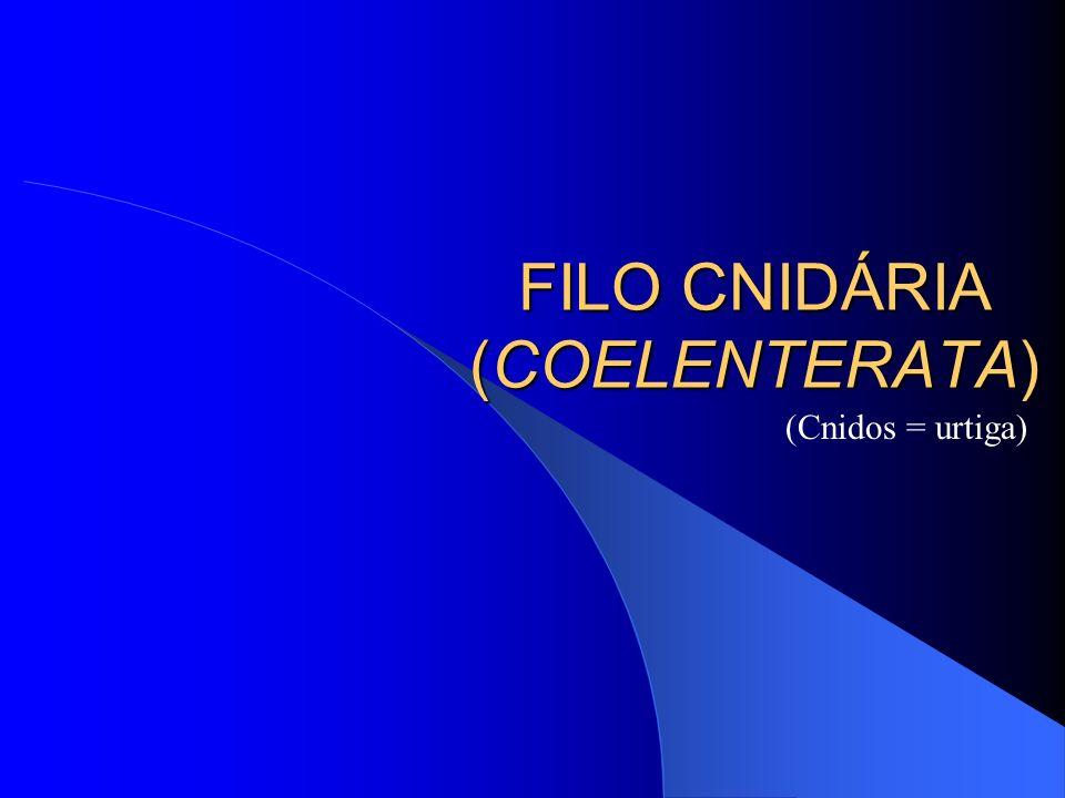 FILO CNIDÁRIA (COELENTERATA) (Cnidos = urtiga)