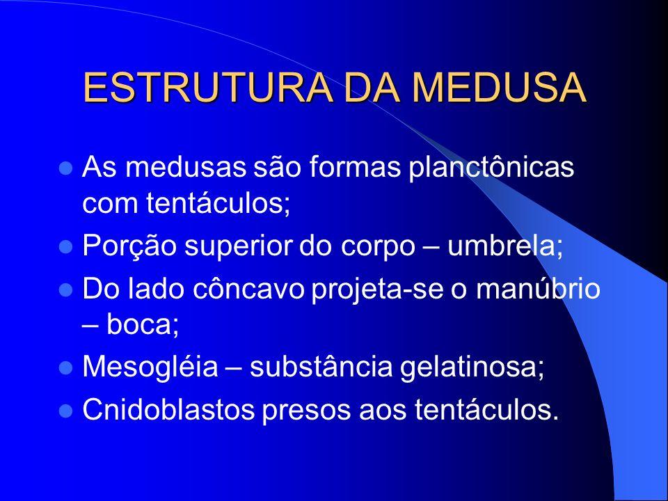 ESTRUTURA DA MEDUSA As medusas são formas planctônicas com tentáculos; Porção superior do corpo – umbrela; Do lado côncavo projeta-se o manúbrio – boc