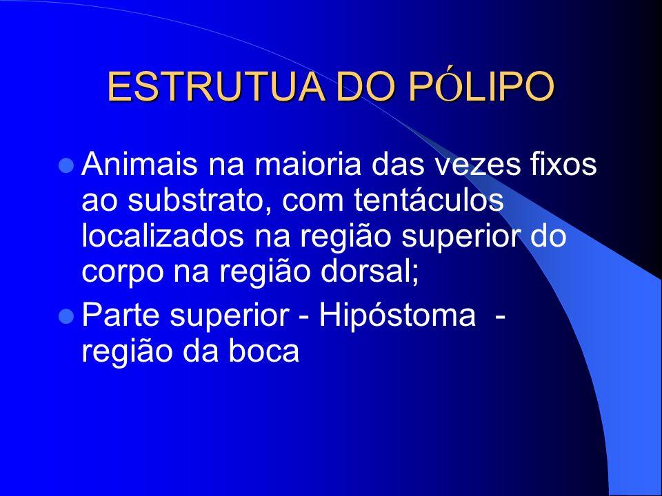 ESTRUTUA DO P Ó LIPO Animais na maioria das vezes fixos ao substrato, com tentáculos localizados na região superior do corpo na região dorsal; Parte s
