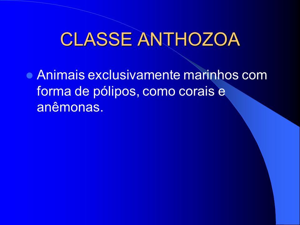 CLASSE ANTHOZOA Animais exclusivamente marinhos com forma de pólipos, como corais e anêmonas.