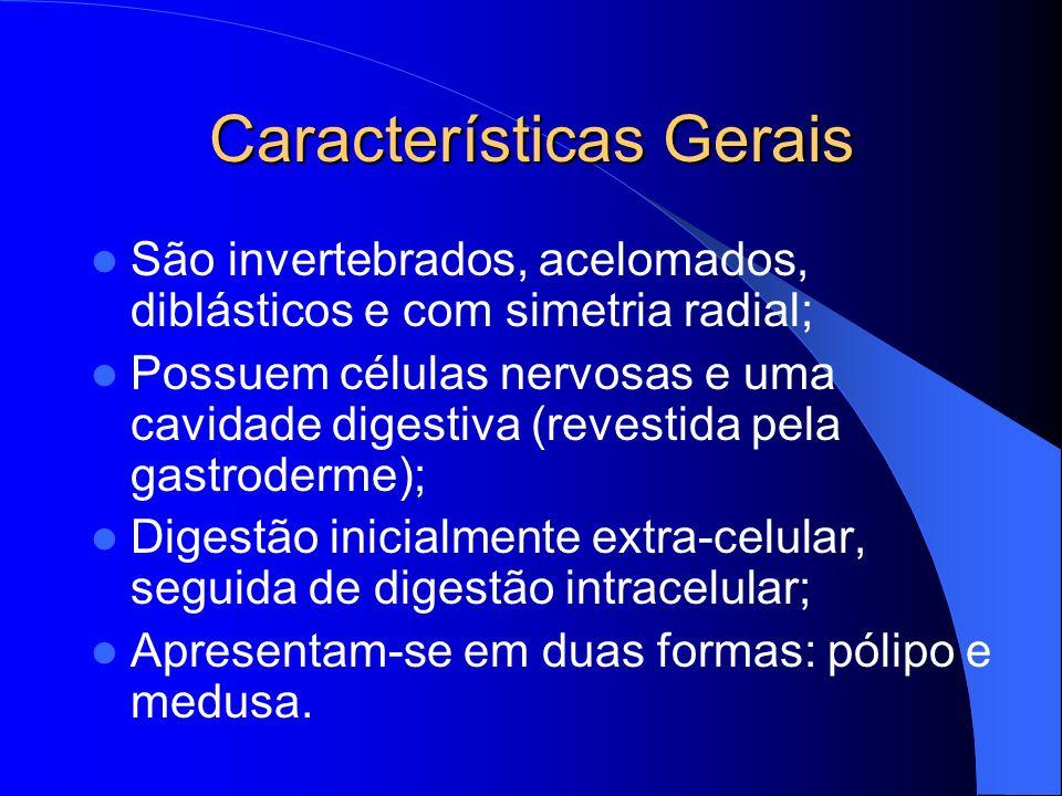 Características Gerais São invertebrados, acelomados, diblásticos e com simetria radial; Possuem células nervosas e uma cavidade digestiva (revestida