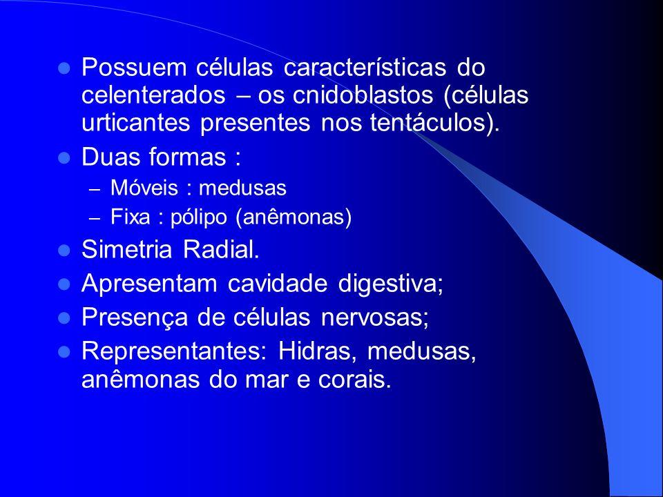 FISIOLOGIA DOS CNID Á RIOS Inicialmente a digestão é extracelular por enzimas digestivas; Depois, o alimento parcialmente digerido é fagocitado pelas células da gastroderme – digestão intracelular.