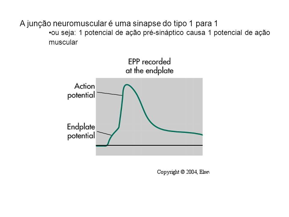 A junção neuromuscular é uma sinapse do tipo 1 para 1 ou seja: 1 potencial de ação pré-sináptico causa 1 potencial de ação muscular