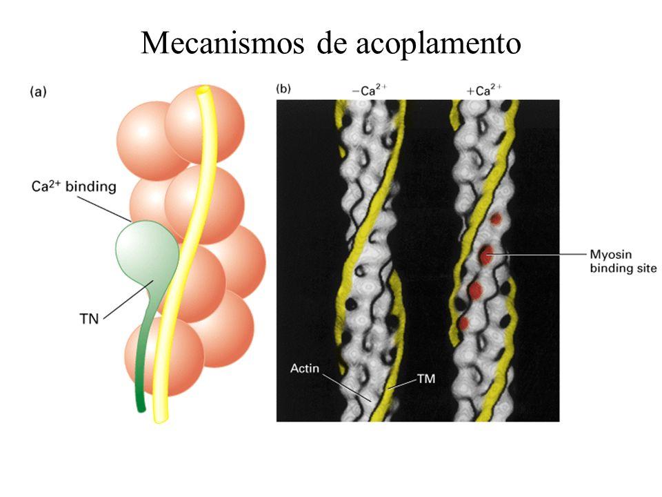 Mecanismos de acoplamento
